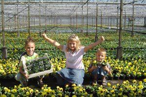 Gerritsen W A J Perkplantenkwekerij - Foto's