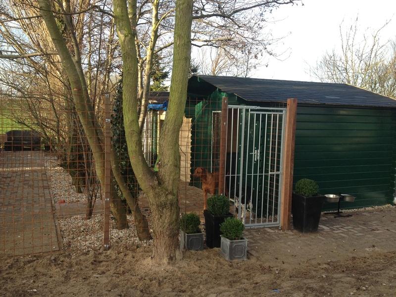 Kyno Connect Hondendagopvang - Foto's