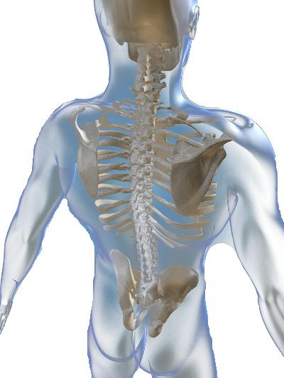 Fysiotherapie 3 Maximaal - Foto's