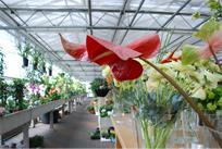 Bloemen Magazijn De Azalea - Foto's