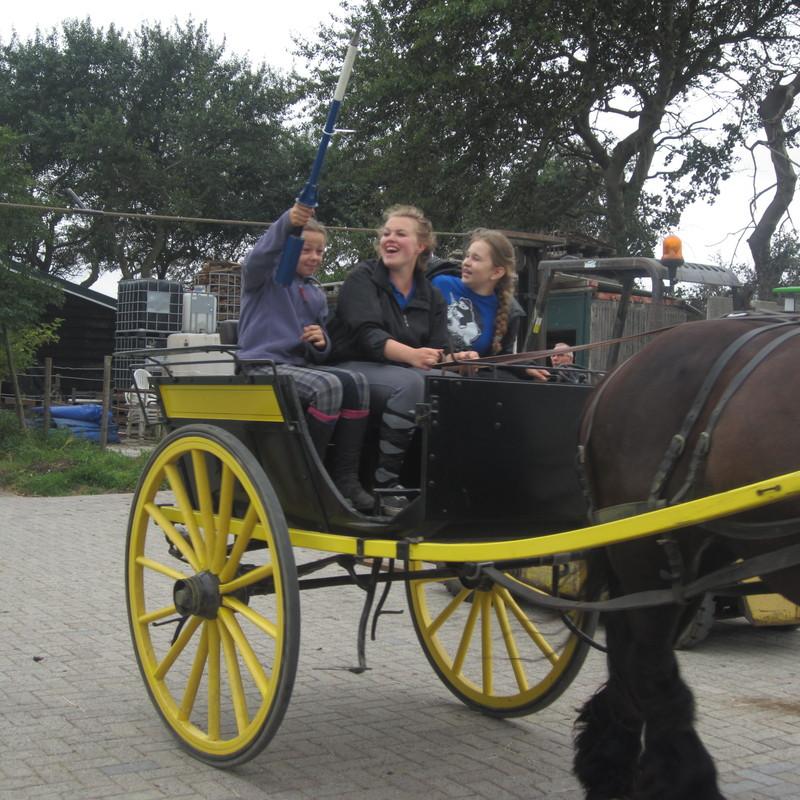 Minicamping en Paardenhouderij De Dankbare - Foto's
