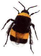 Jan van der Werf- Insectenbestrijding - Foto's
