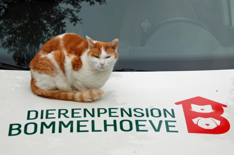 Dierenpension Bommelhoeve - Foto's