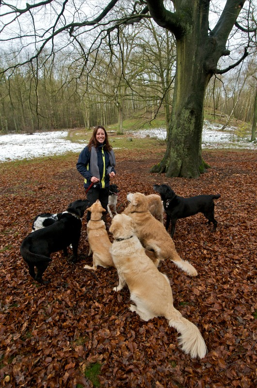 Stabij Hondenuitlaatservice & Dierenverzorging - Foto's