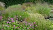 Sevenhills Gardenplants - Foto's