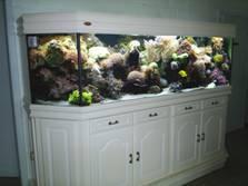 Aquarium De Siervis - Foto's