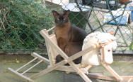 Kattenhotel Chat Noir - Foto's