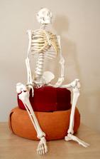 Skelet1